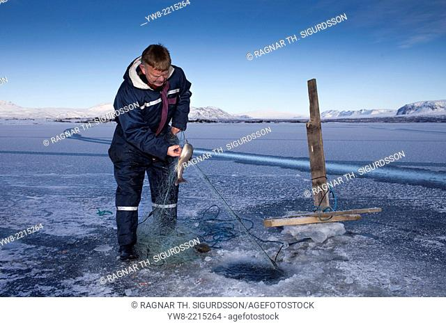 Ice fishing for arctic char on Lake Thingvellir, Thingvellir National Park, Iceland