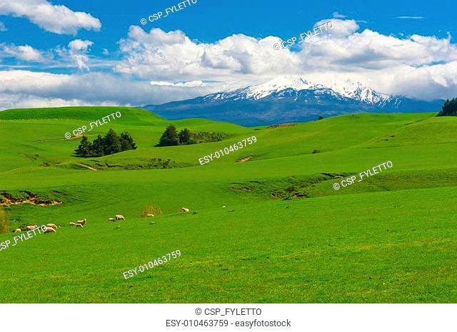 Mt. Ruapehu and fields