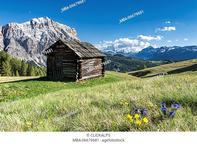 La Valle / Wengen, Alta Badia, Bolzano province, South Tyrol, Italy. In the pastures of Pra de Rit