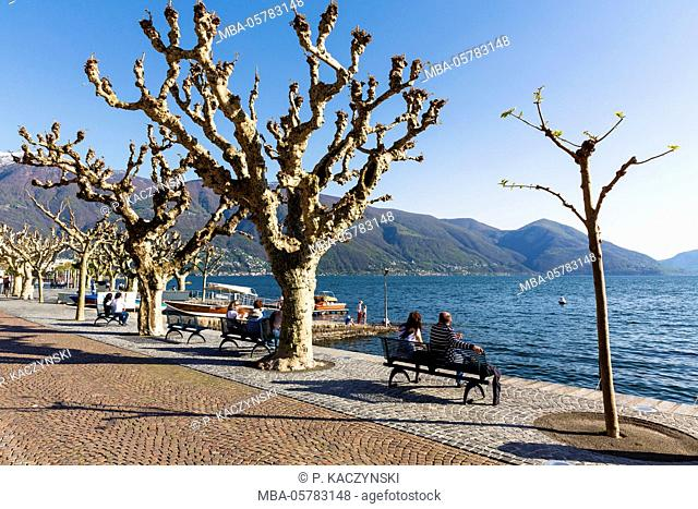 Park benches at the waterside promenade between plane trees, Lago Maggiore, Ascona, Ticino, Switzerland, Alps