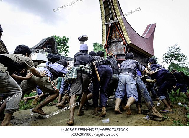 During a traditional ritual funeral of the Tana Toraja the men of the village carry the catafalque in a weird funeral procession in which the people at the...