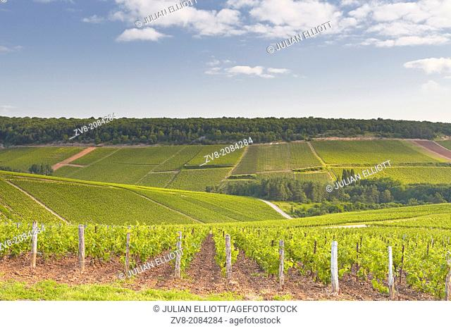 Champagne vineyards in the Cote des Bar area of the Aube department near to Les Riceys