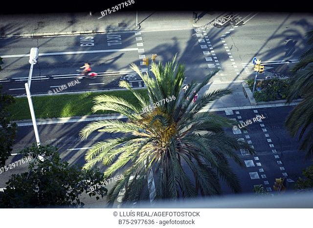 Early morning view of traffic. Barcelona, Catalonia, Spain