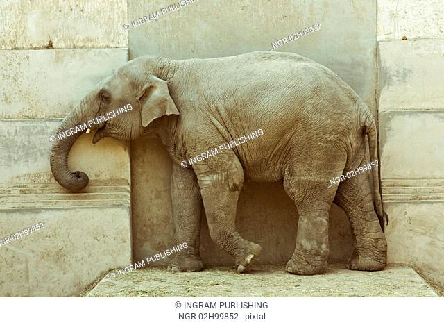 elephant calf over door background photo