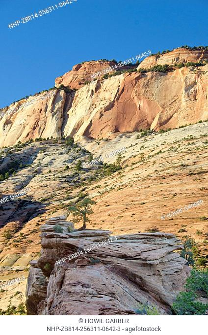 Sandstone Walls and silouetted juniper Tree, Canyon Overlook Trail, Zion National Park, near Springville and St. George, Utah and Zion-Mount Carmel Tunnel on...