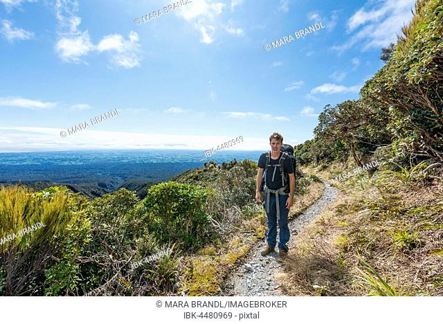 Hiker on hiking trail, Pouakai Circuit, Egmont National Park, Taranaki, North Island, New Zealand