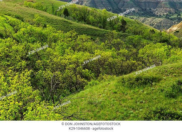 Badlands coulee with lush spring vegetation