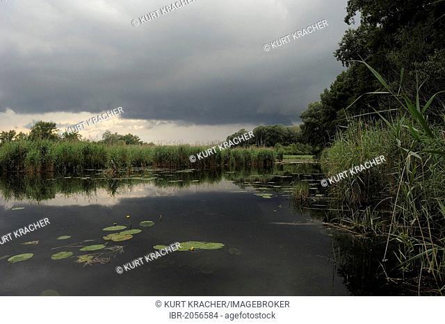 Thunderstorm approaching, Danube wetlands, Donau Auen National Park, Lower Austria, Austria, Europe