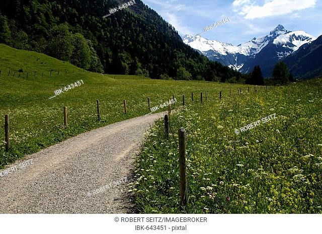 Countryside path going through spring meadow with view of the Allgaeu Alps, Gerstruben, Upper Allgaeu, Bavaria, Germany, Europe