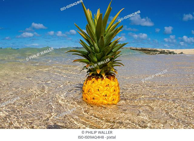 Pineapple standing in shallow sea