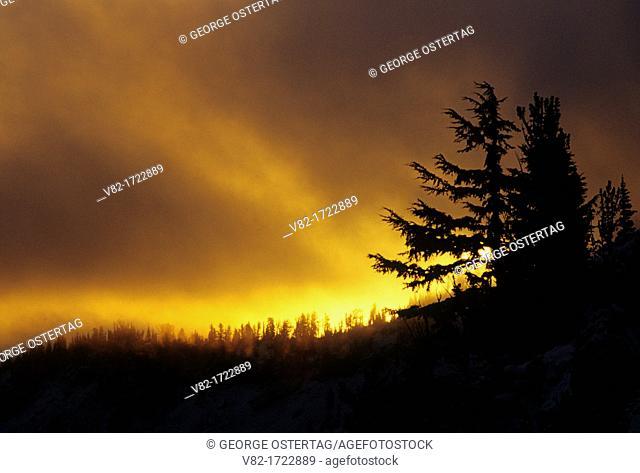 Sunrise along Bear Creek Mountain Trail, Goat Rocks Wilderness, Wenatchee National Forest, Washington