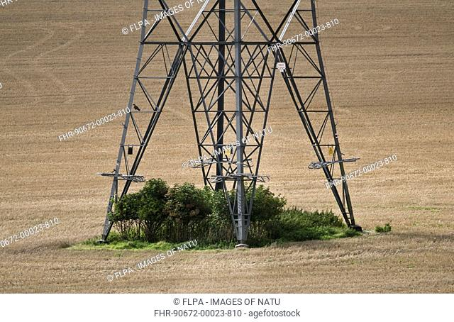 Electricity transmission pylon standing in arable field, with unintentional wildlife habitat underneath, Dorset, England, september