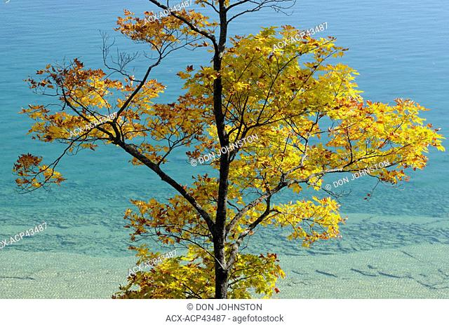 Maple trees along the shore of Lake Mindemoya, Manitoulin Island, Ontario, Canada