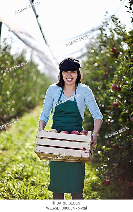 Croatia, Baranja, Young woman carrying crate full of apples