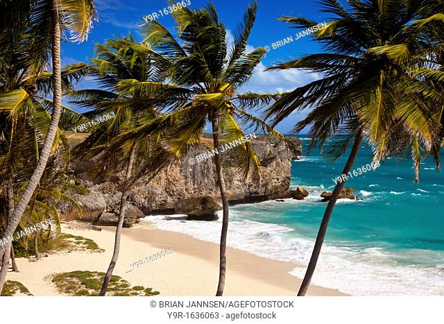 Palm trees at Bottom Bay on the the southeast coast of Barbados, West Indies