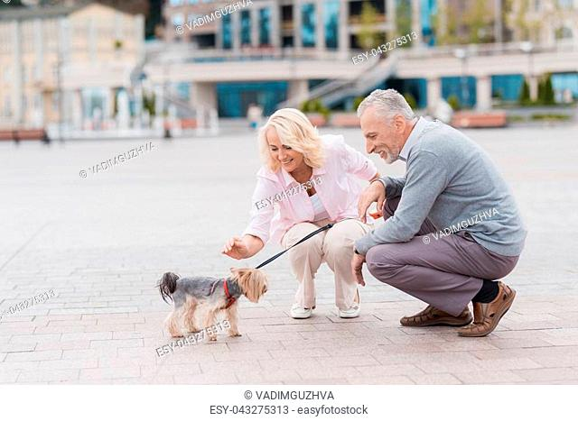 An elderly couple is walking in the square with her little dog. They walk, and the dog goes next to them on a leash. They are all happy