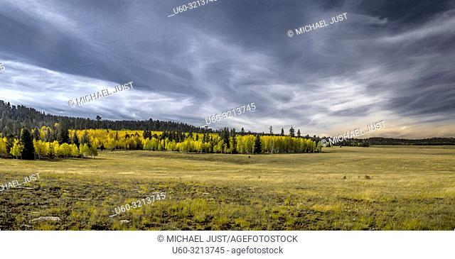 Fall colors have arrived to the Kaibab National Forest in Northern Arizona
