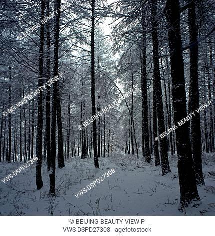 Snow road of Great Khingan in Heilongjiang province,China