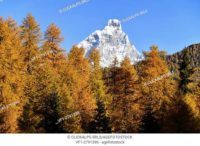 Cervino and autumn colors, valtournenche valley, Aosta Valley,Italy