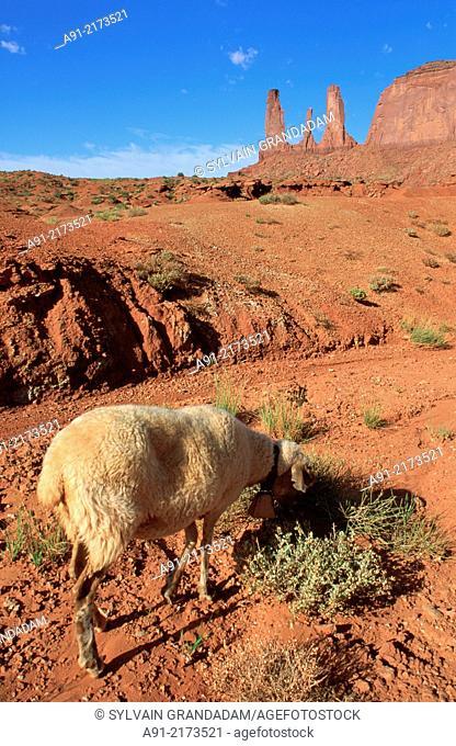 Usa,Utah,Mon.valley,Sheep gazing at foot of the Three Sisters peaks