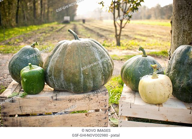 Variety of Green Pumpkins on Wood Crates, Close-Up