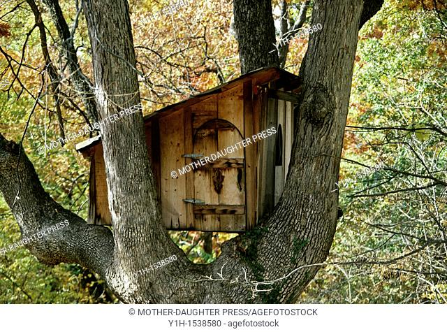 Treehouse with arched doorway sitting in arms of large oak tree in fall