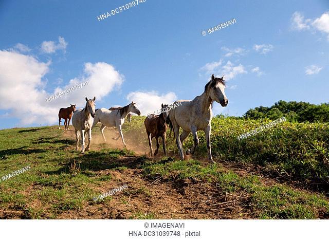 Horses running on pastureland