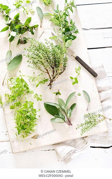 Fresh mixed herbs like sage (Salvia), oregano (Origanum vulgare), thyme (Thymus), chickweed (Stellaria media) and peppermint (Mentha piperita) on white chopping...