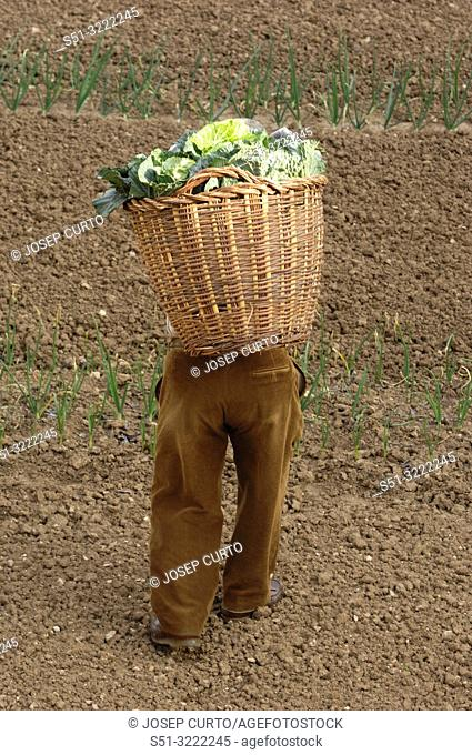 farmer loaded with a basket of vegetables