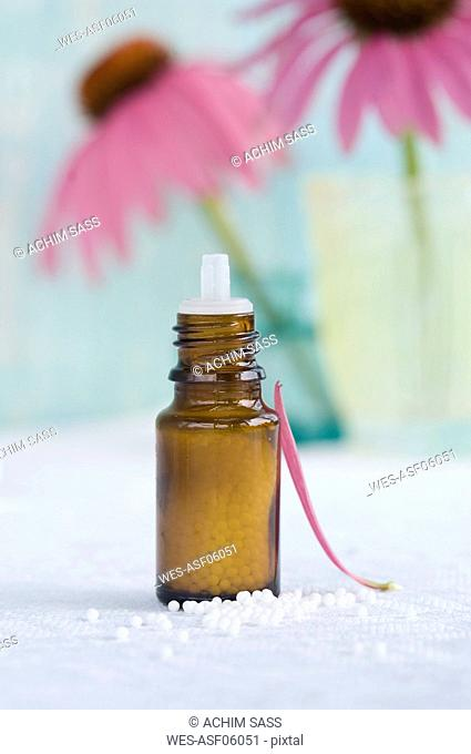 Flask of globules and petal of purple coneflower