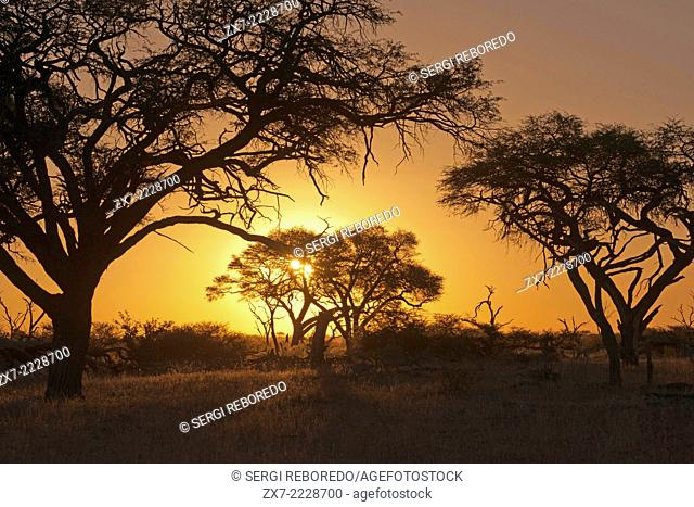 Sunset near the camp Savute Elephant Camp by Orient Express in Botswna in Chobe National Park