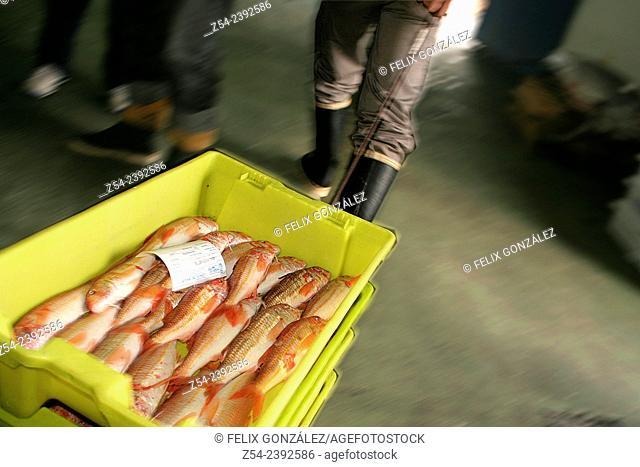 Red mullet box in Fish Market at Aviles Asturias, Spain