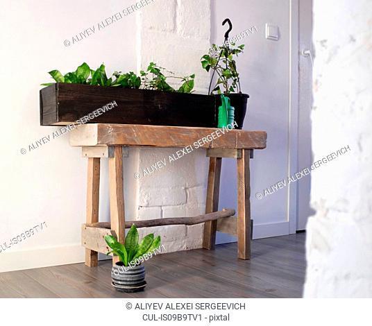 Potted plants arrangement in hallway of home