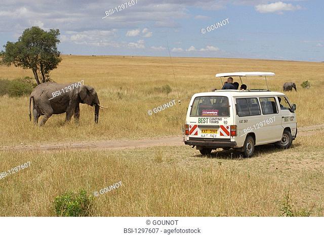Elephant, photograph taken in Kenya. Loxodonta sp  Elephant  Elephantid  Mammal