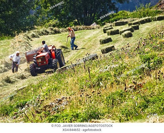 Mowing grass, Viados, valley of Gistain, Sobrarbe, Posets-Maladeta Natural Park, Pyrenees Mountains, Huesca province, Aragon, Spain