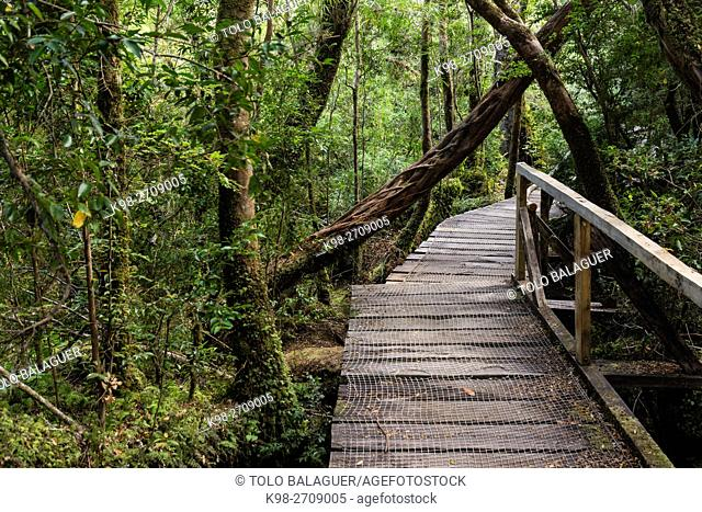 Parque Nacional Chiloé, Cucao, cordillera de la costa, archipiélago de Chiloé ,provincia de Chiloé ,región de Los Lagos,Patagonia, República de Chile