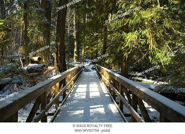 Wooden walkway with light dusting of snow, Cathedral Grove in MacMillan Provincial Park, near Port Alberni, Vancouver Island, BC
