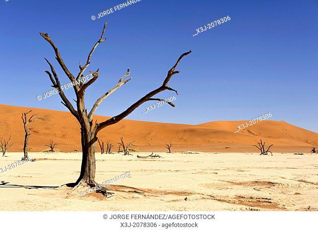 Silhouette of dead trees in the Deadvlei, Namib Naukluft National Park, Sossusvlei, Namibia, Africa