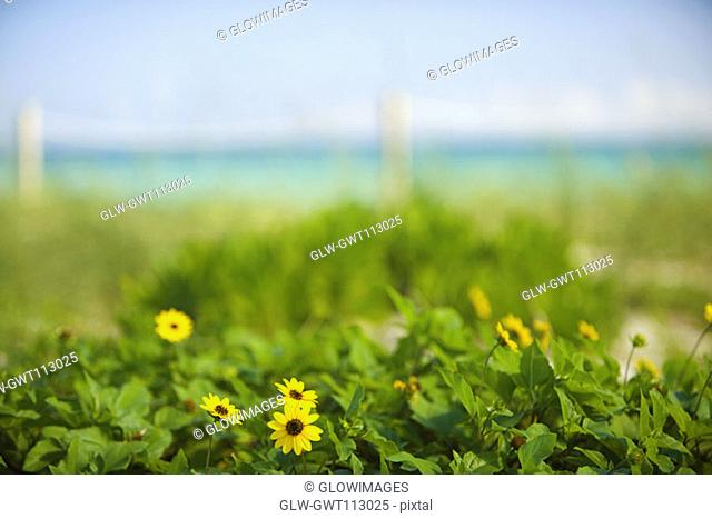 Close-up of flowers in a field