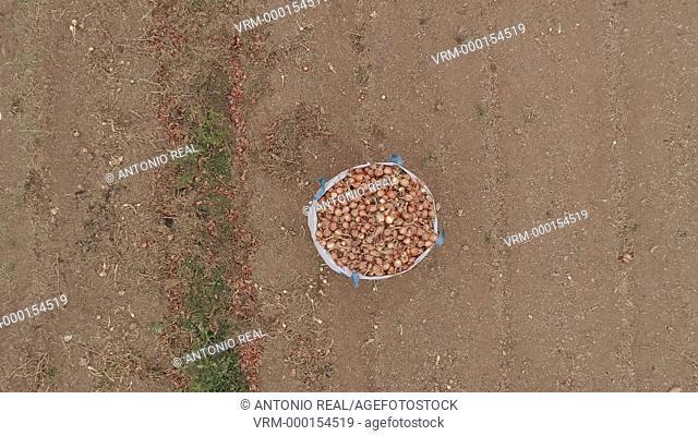 Aerial view. sacks of onions. Almansa. Albacete province