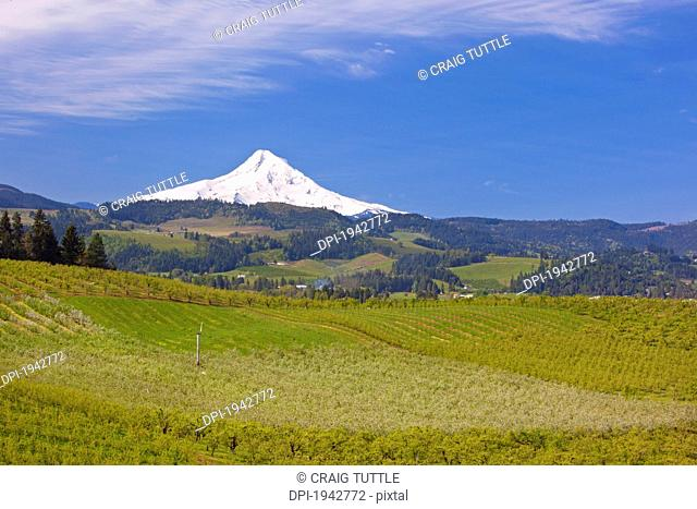 view of mount hood over a landscape in the hood river valley, oregon united states of america