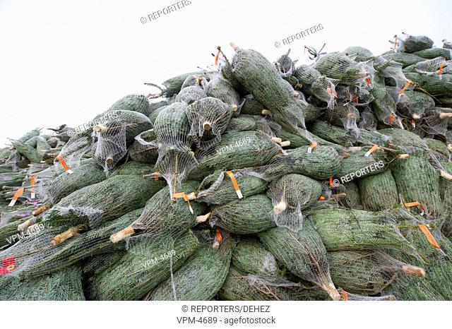 Illustration shows the product of christmas tree in ardenn, Belgium Illustration de production de sapin de noel en ardenne Belgique photo : anthony dehez...