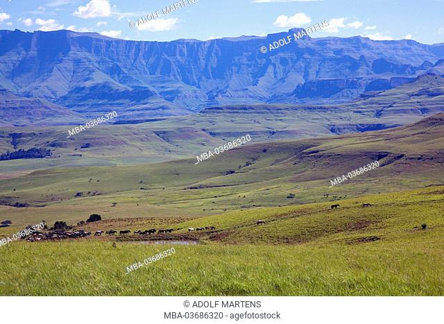 Africa, South Africa, KwaZulu Natal, Drakensberge, border area, Lesotho