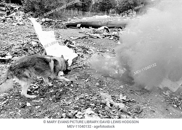 Rusty the Alsatian, an air crash investigation sniffer dog, searches a vast pile of wreckage for the vital black box (flight data recorder)