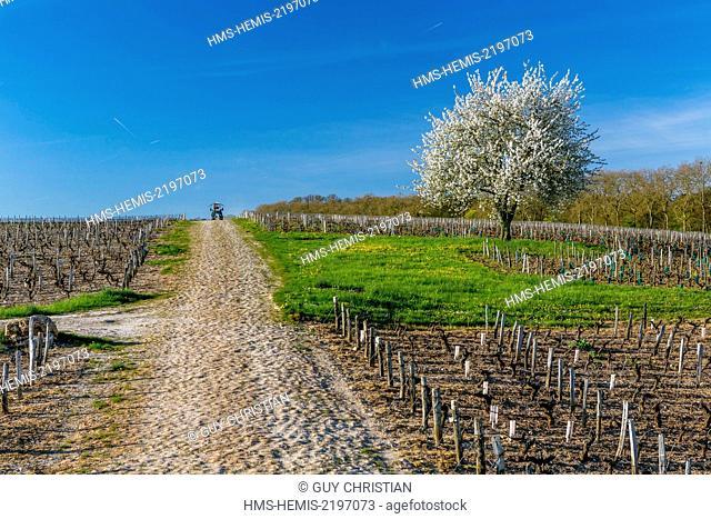 France, Nievre, Pouilly sur Loire