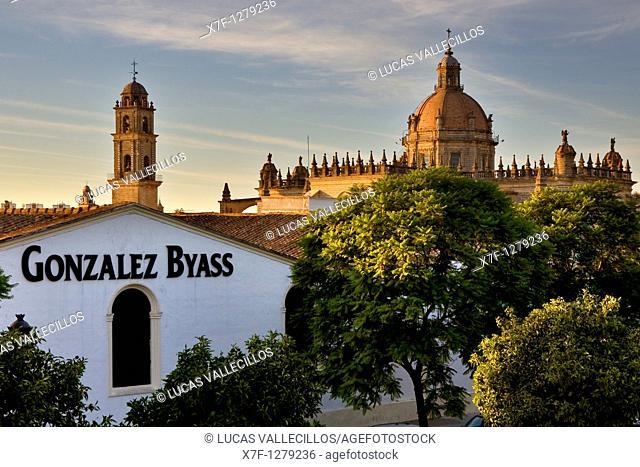 wineries Gonzales Byass and Cathedral built 17th century  Jerez de la Frontera  Cádiz province  Spain