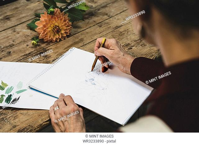 High angle close up of artist sitting at table, working on pencil drawing of orange Dahlia