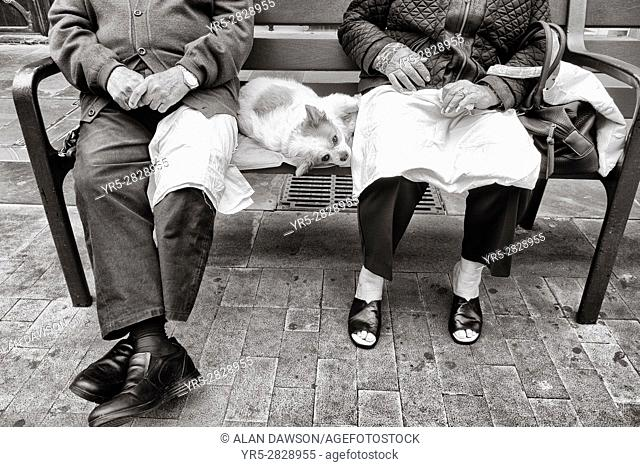 Elderly couple with pet dog sitting on bench in Las Palmas, Gran Canaria, Canary Islands, Spain,
