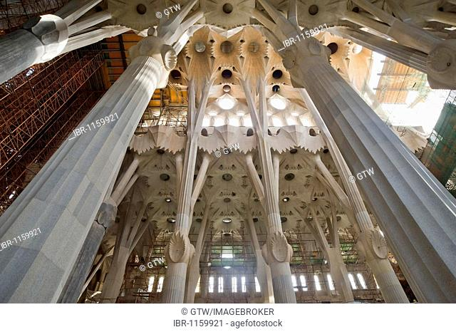 Tree-shaped columns and vault, La Sagrada Família or Expiatory Temple of the Holy Family, Unesco World Heritage Site, Barcelona, Catalonia, Spain, Europe