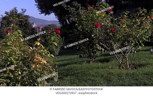 The Rose Garden, Florence, Tuscany, Italy